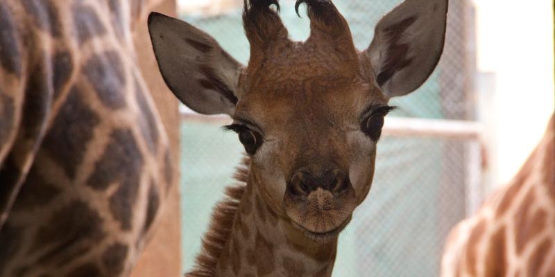 3. Zoo de SP